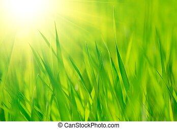 봄, 밝은, 동정하다, 녹색, 태양, 신선한, 풀