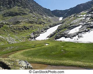 봄, 산, 얼음, 아름다운, wetland, 지나치게 수식적인, 목초지, 풀, 오스트리아, 하이킹, 여름, stubai, flowers., 은 불렀다, 용해, paradies, 알프스 산맥, 눈, 활강의, 녹색, 티롤, 길게 나부끼다