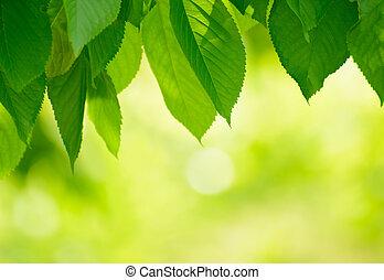 봄, 잎, 밝은, 녹색의 배경, 신선한, 위의