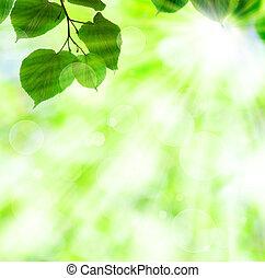 봄, 잎, 태양, 녹색, 광선