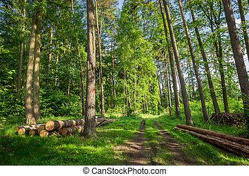 봄, 폴란드, 녹색의 숲, 놀랄 만한