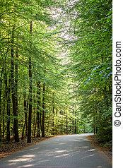 봄, 폴란드, 이상한, 녹색의 숲