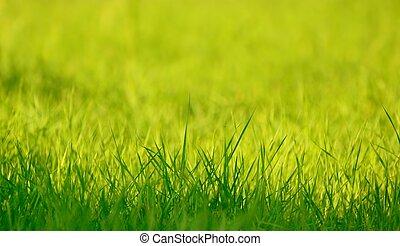 봄, 풀, 녹색, 햇빛, 신선한