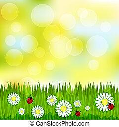봄, 풀, chamomile, 패턴, 희미해지는