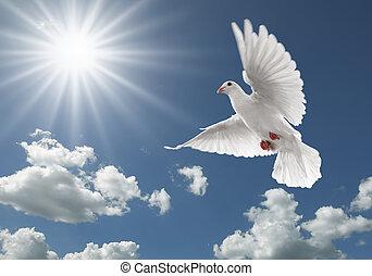 비둘기, 하늘