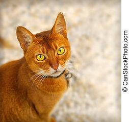 빨강, 고양이