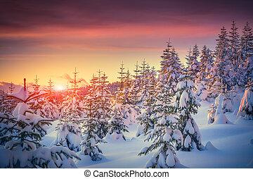 산, 겨울, 다채로운 해돋이, 조경술을 써서 녹화하다, 숲
