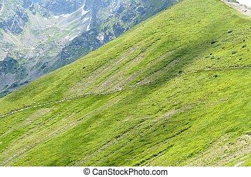 산, 높은 산, tatra, 녹색, poland.