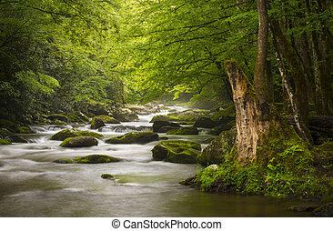 산, 멋진, 몸을 나른하게 하는, 자연, 연기가 자욱한, 공원, gatlinburg, tn, 평화로운, 안개가 지욱한, tremont, 강, 한 나라를 상징하는, 조경술을 써서 녹화하다, scenics