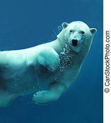 상세한 묘사, 수중 사진, 북극 곰