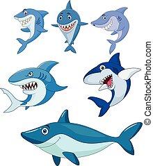 상어, 세트, 만화, 수집