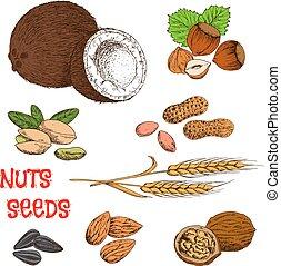 상징, 곡물, 콩, 미친, 밑그림, 씨