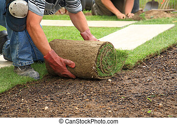 새로운, 잔디, 잔디를 깔는 것