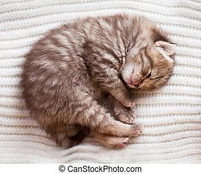 새로 태어난 아기, 잠, british, 고양이 새끼