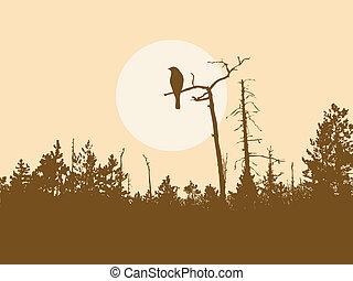 새, 실루엣, 나무