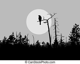 새, 실루엣, 벡터, 나무