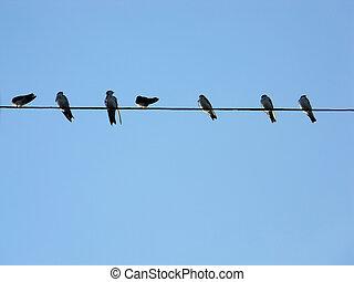 새, feather....