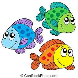 색, 귀여운, 물고기