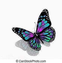 색, 푸른 배경, 고립된, 나비, 백색
