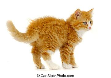 서 있는, 단 것, 고양이, 배경, 고양이 새끼, 백색