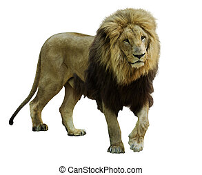 서 있는, 사자