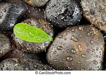선, freshplant, 돌, 은 떨어진다, 물