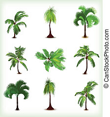 세트, 나무., 삽화, 벡터, 손바닥, 여러 가지이다
