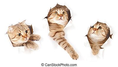 세트, 찢는, 고립된, 고양이, 종이, 구멍, 하나, 쪽