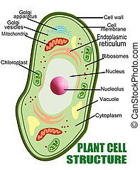 세포, 식물, 구조