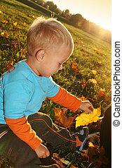 소년, 거의, 잎, 공원, 황색, 가을, 노는 것
