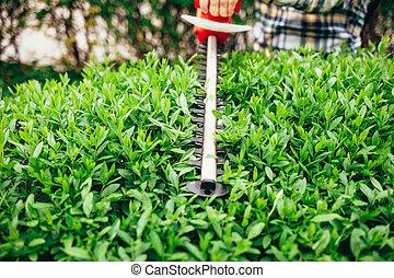 손질하는 사람, 녹색 수풀, 남자, 공급 절감, 전기