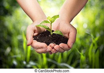 손, 배경, 풀, -, 식물