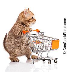 쇼핑, 고립된, british, 고양이, 손수레, white., 고양이 새끼, osolated