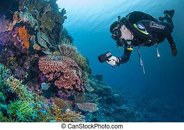 수중 사진, 암초, scape