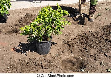 수풀, 설치, 일, -, 위치, 정원사 노릇을 함, 해석