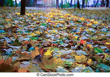 숲, 가을 조경