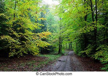 숲, 아슬아슬한, 녹색, 폴란드, 좁은 길