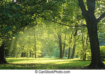 숲, 여름, 나무