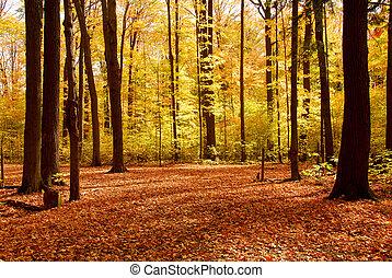 숲, 조경술을 써서 녹화하다, 가을