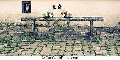 시골, 고양이, 야드