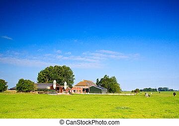 시골, 농장, 암소, 목초지