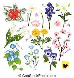 식물상, 세트, collection., 벡터, 꽃, 3.