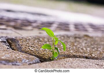 식물, 나이 적은 편의