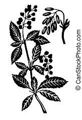 식물, 벡터, 실루엣, 백색 배경