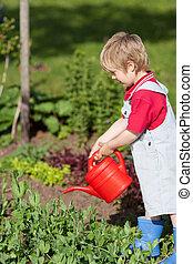 식물, 소년, 해수욕장의, 정원