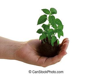 식물, 손