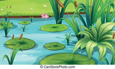 식물, 연못, 많은