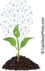 식물, 은 떨어진다, 녹색, 나이 적은 편의, 비