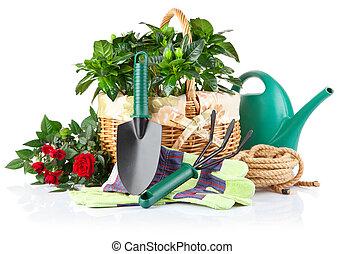 식물, 장비, 꽃, 녹색, 정원