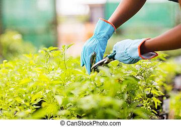 식물, 정원사, 트리밍